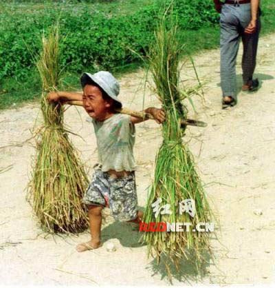 """网上流传的""""三伏天做农活的农村孩子""""照片。"""